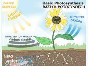 Fotosynth